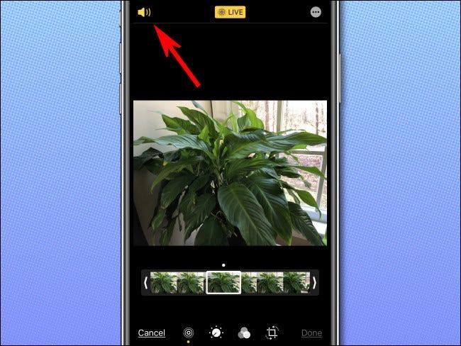 Toque no ícone do alto-falante no canto superior esquerdo da tela para desativar o áudio da Live Photo.